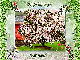 diaporama pps Un printemps tout neuf