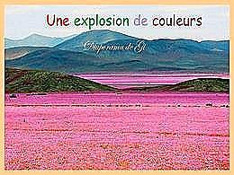 diaporama pps Une explosion de couleurs
