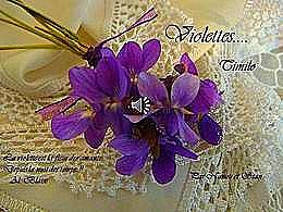 diaporama pps Violettes timilo