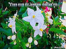 diaporama pps Vous avez dit jasmins dahlias etc…