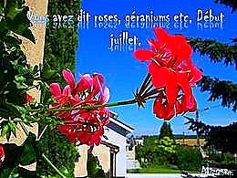 diaporama pps Vous avez dit roses géraniums etc…