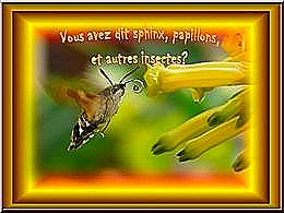 diaporama pps Sphinx papillons et autres insectes