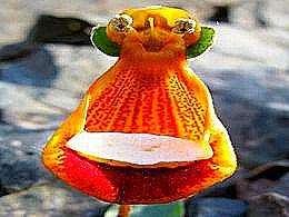 diaporama pps 17 magnifiques fleurs