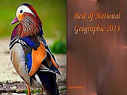 diaporama pps Best of national geographic 2013