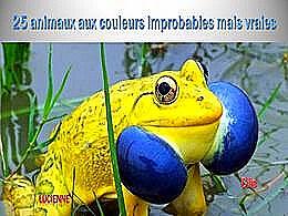 diaporama pps 25 animaux aux couleurs improbables mais vraies