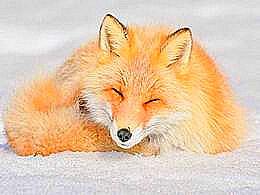 diaporama pps 7 des animaux les plus mignons