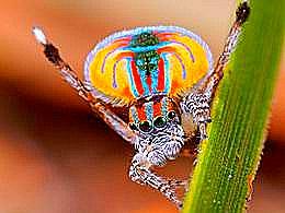 diaporama pps 8 araignées aussi étranges qu'extraordinaires