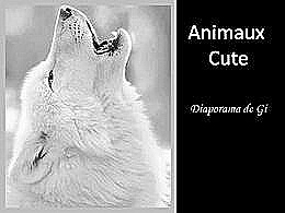 diaporama pps Animaux cute