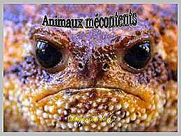 diaporama pps Animaux mécontents