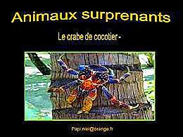 diaporama pps Animaux surprenants le crabe de cocotier