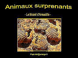 diaporama pps Animaux surprenants – Lézard d'Armadille