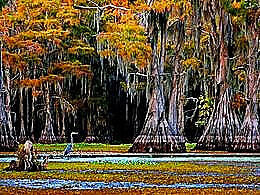 diaporama pps Caddo Lake USA