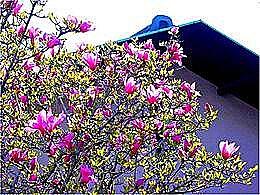 diaporama pps Cerisiers de Yuzuraha