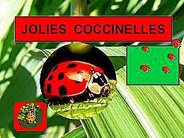 diaporama pps Ces jolies coccinelles