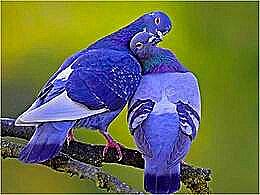 diaporama pps Chants d'oiseaux