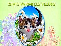 diaporama pps Chats parmi les fleurs