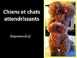 diaporama pps Chiens et Chats attendrissants
