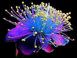 diaporama pps Craig Burrows photographe sculptures en fleurs séchées
