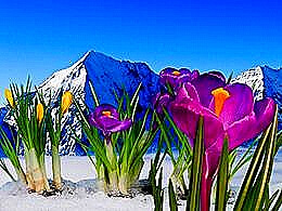 diaporama pps Crocuses in tatra mountains