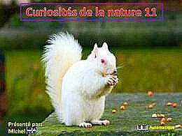 diaporama pps Curiosité de la nature 11