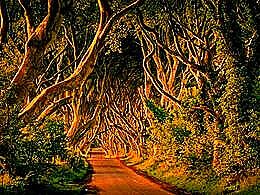 diaporama pps Dark hedges – Northern Ireland