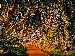 diaporama pps Dark hedges – Northern Ireland