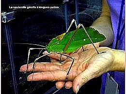 diaporama pps De drôles d'insecte