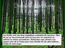 diaporama pps De majestueuses forêts