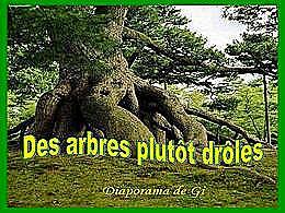 diaporama pps Des arbres plutôt drôles