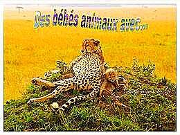 diaporama pps Bébés animaux