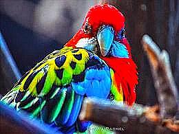 diaporama pps Oiseaux les plus colorés du monde