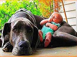 diaporama pps Enfants avec leurs énormes chiens