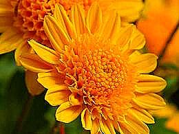 diaporama pps Fleurs I