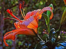 diaporama pps Fleurs II