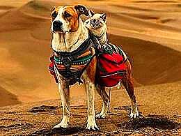 diaporama pps Henry le chien et Baloo le chat