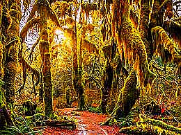 diaporama pps Hoh rain forest USA