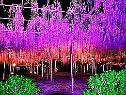 diaporama pps Kawachi Fuji garden japan