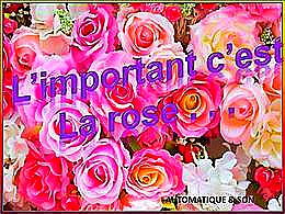 diaporama pps L'important c'est la rose