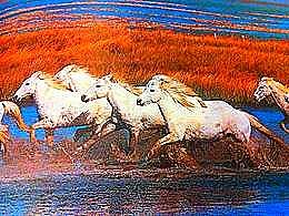 diaporama pps Le cheval une créature merveilleuse