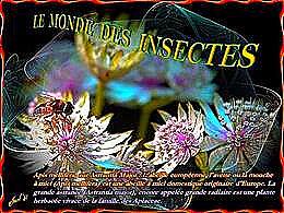 diaporama pps Le monde des insectes