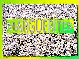 diaporama pps Les marguerites