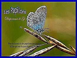diaporama pps Les papillons N°2