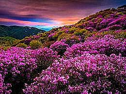 diaporama pps Mt. Hwangmaesan South Korea