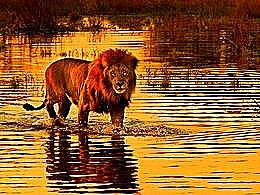 diaporama pps Okavango delta – Botswana
