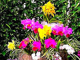 diaporama pps Orchidées 2