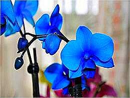 diaporama pps Orchidées