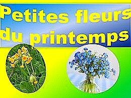 diaporama pps Petites fleurs du printemps