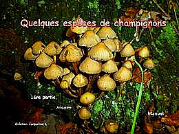 diaporama pps Quelques Champignons