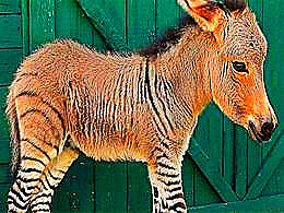 diaporama pps Étranges animaux hybrides