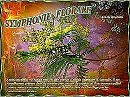 diaporama pps Symphonie florale